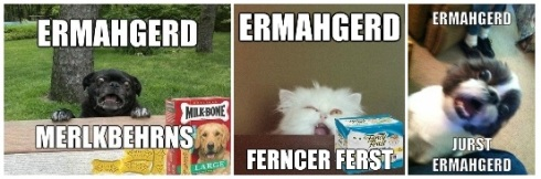 ermahgerd animals
